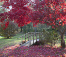 Red Leaves Bridge